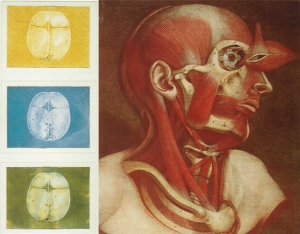 Test printing of yellow and blue plates of the human skull by L'Admiral (1738) and the four-color mezzotint of the musculature of the head by Gautier (1745)