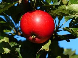 Red Apple Green Leaves Blue Sky