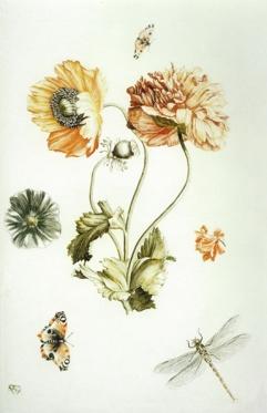 Johan Teyler intaglio color print