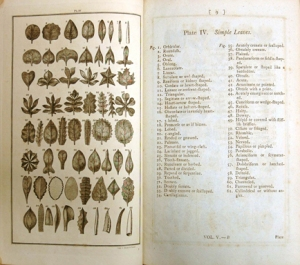 "Pages from an early edition of Linnaeus' ""The System of Nature"""